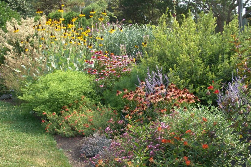 Low maintenance planting design more than just plant for Garden shrubs