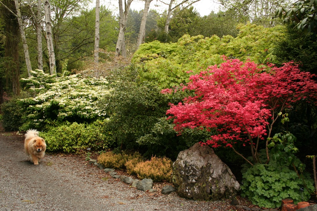 Low maintenance planting design more than just plant for Low maintenance border shrubs