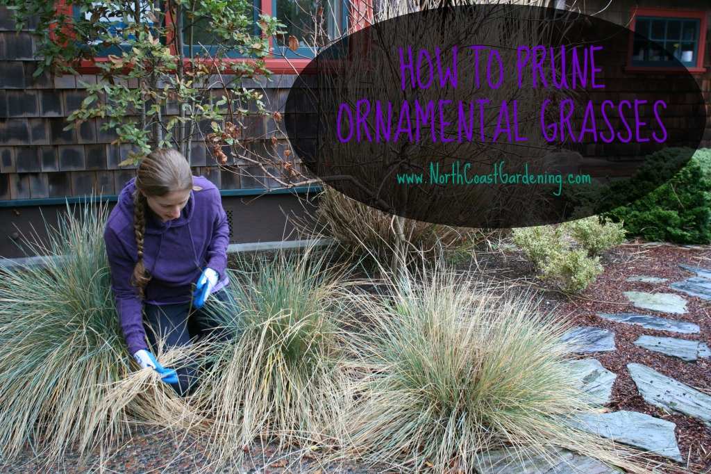 Stop Don T Prune That Grass How To Prune Ornamental