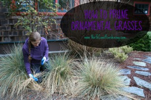 How to prune ornamental grasses