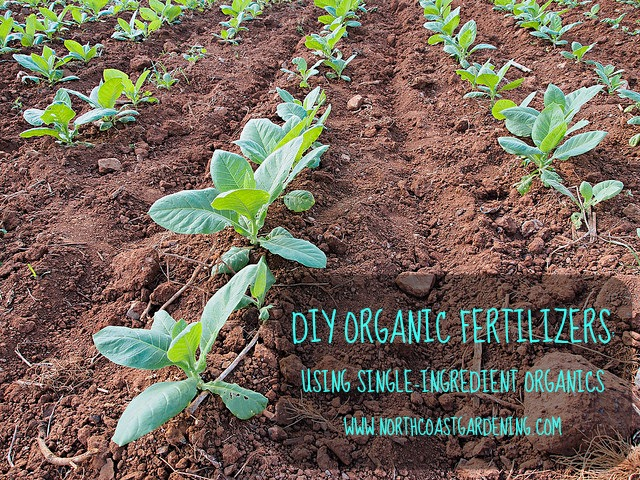 DIY ORGANIC FERTILIZERS