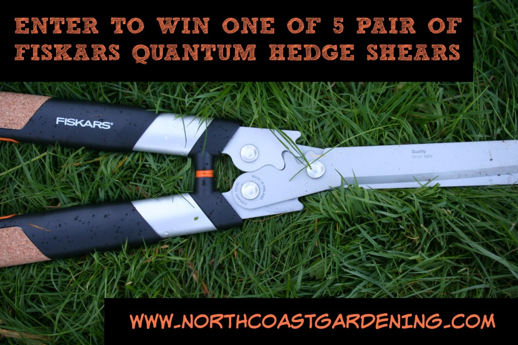 Enter to win one of five pair of Fiskars Quantum hedge shears