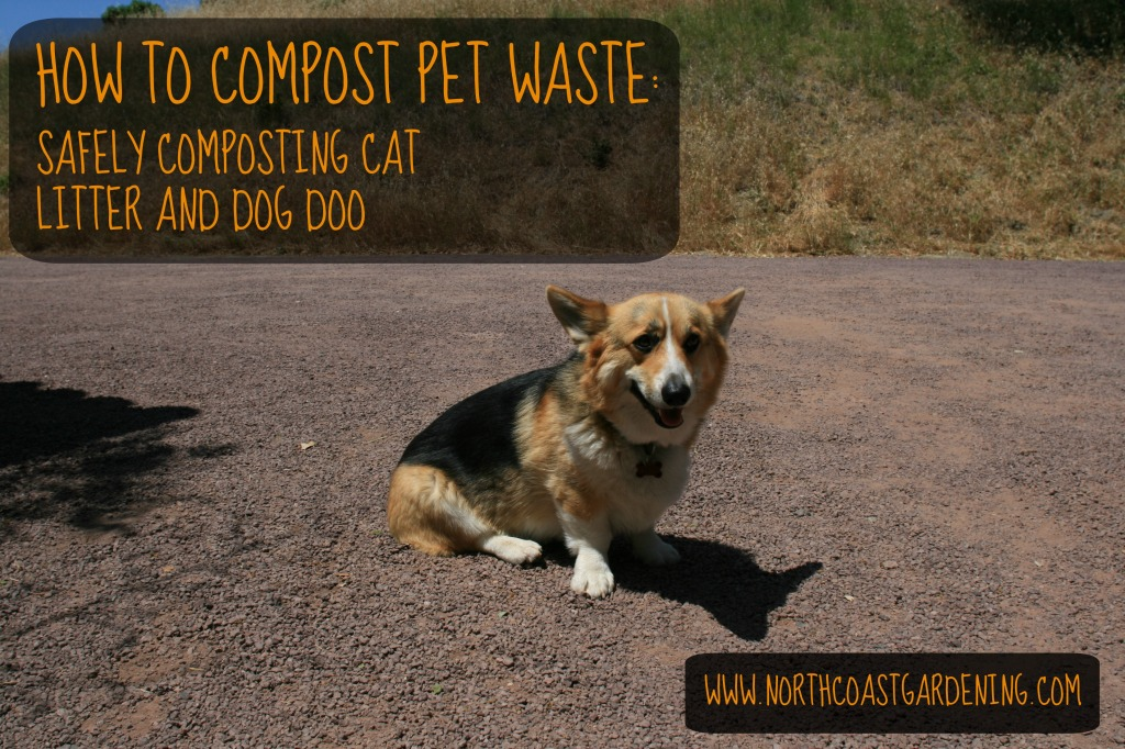 How to compost dog and cat waste safely and effectively