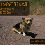 How to Compost Pet Waste: Making Pet Ownership More Earth-Friendly