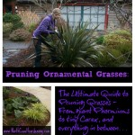 Pruning Ornamental Grasses: The Ultimate Guide
