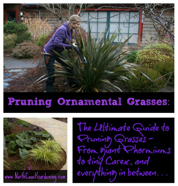 Pruning Ornamental Grasses The Ultimate Guide sq