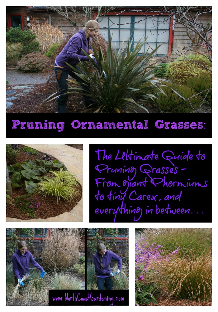 Pruning Ornamental Grasses: The Ultimate Guide to Pruning Every Type of Grass (www.NorthCoastGardening.com)