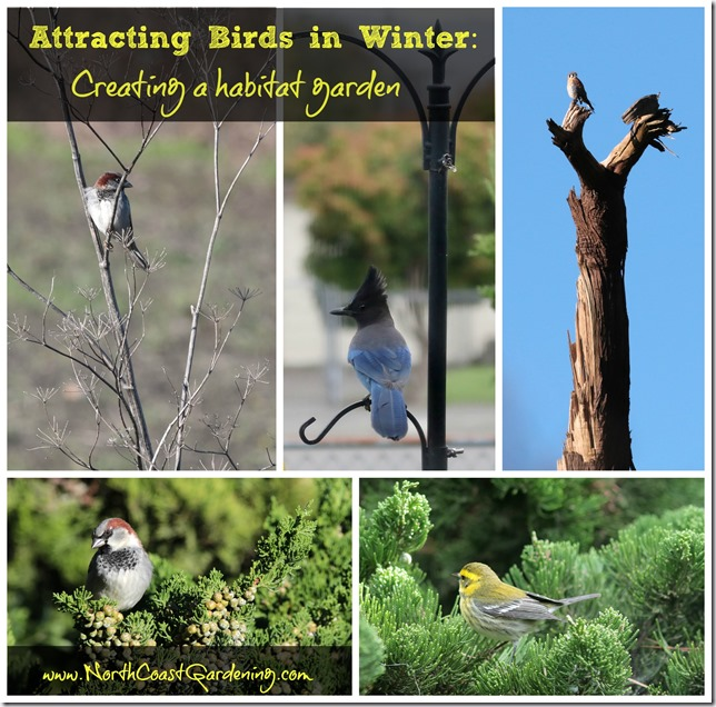 Attracting Birds in Winter: How to create a habitat garden by proving food, water, cover to help birds through winter by www.NorthCoastGardening.com.