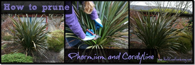 How-to-prune-Phormium-and-clumping-Cordyline-grasses.jpg