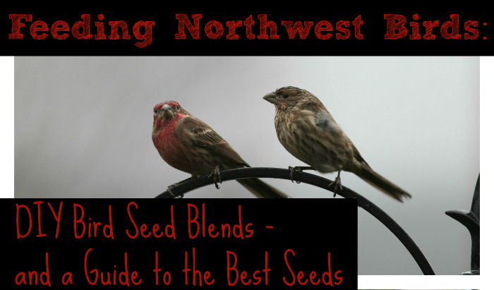 DIY Bird Seed Recipe Blends for Feeding Wild Birds from North Coast Gardening