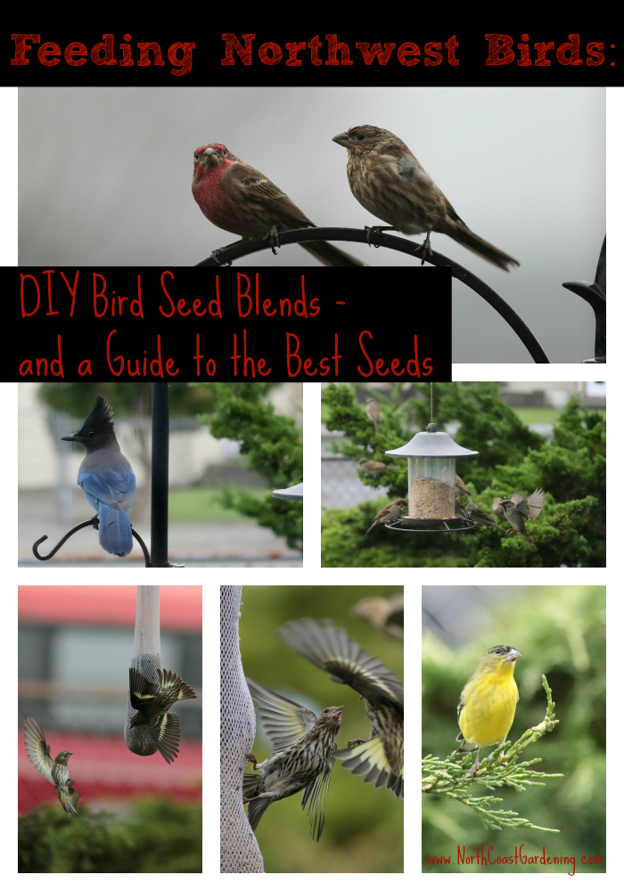 DIY Bird Seed Recipe Blends for Feeding Wild Birds