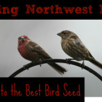 DIY Bird Seed Blends for Feeding Wild Birds (and a Guide to the Best Seeds)