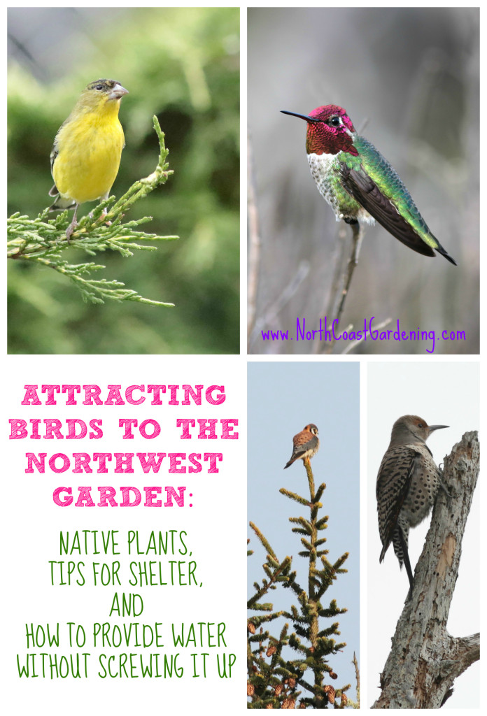Attracting birds to the Pacific Northwest garden