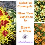 The Many Faces of Coreopsis: New Varieties to Love