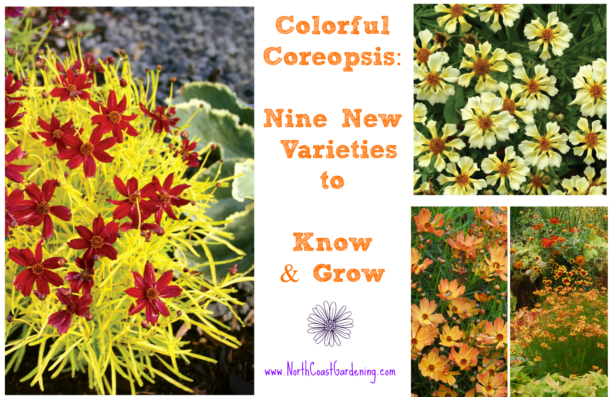 The Many Faces Of Coreopsis New Varieties To Love