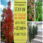 Fabulously Fastigiate: Narrow Plants for Skinny Spaces