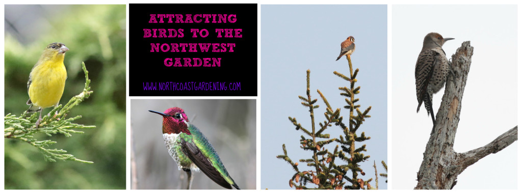 How to attract birds to the northwest garden - plant picks and tips for shelter and water