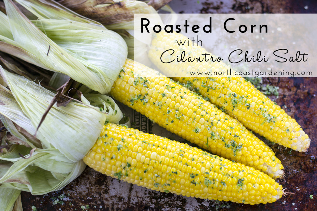 Roasted Corn with Cilantro Chili Salt  from www.northcoastgardening.com