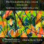 Photographing the Leaves of Fall: with Saxon Holt (Book Giveaway!!)